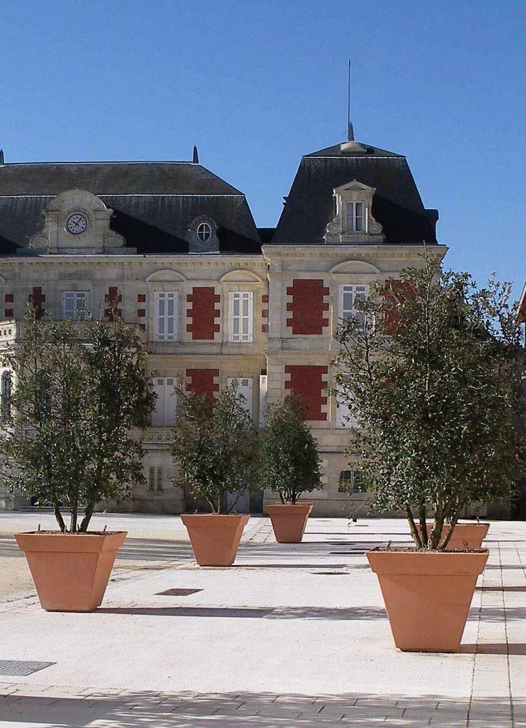 GEBEBAC Quercus ilex CP Square