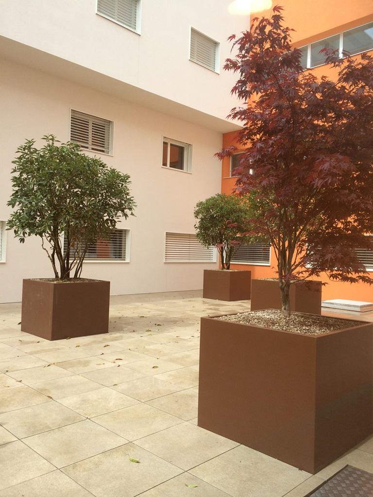 GEBEBAC Acer palmatum (Rumilly 74)