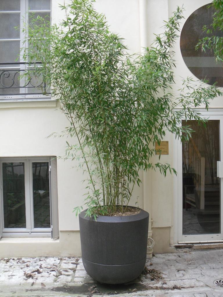 GEBEBAC Bambou