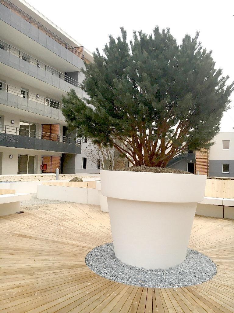 GEBEBAC Pinus sylvestris watereri nana (Aix les bains 74)