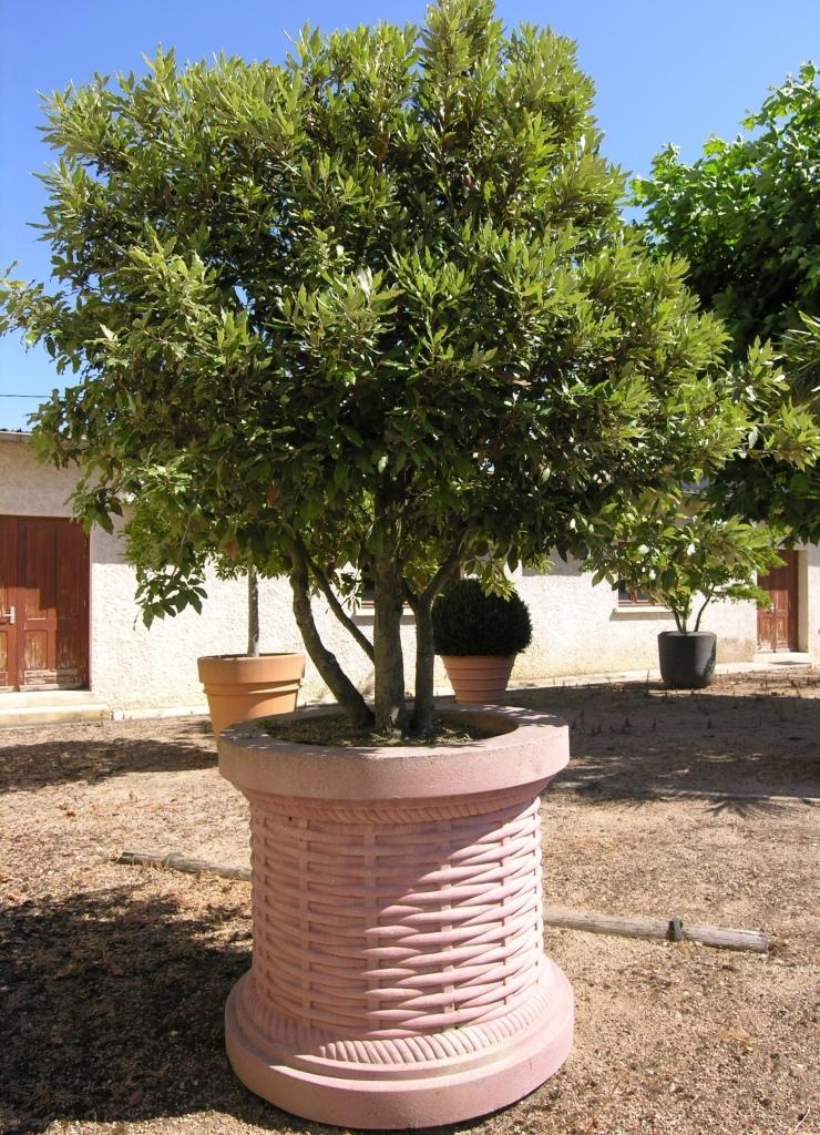 GEBEBAC Quercus ilex bac Thebaut